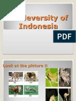 Biodeversity of Indonesia