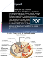 NEUROCIENCIAS Medula Espinal-modificada