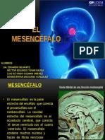 Mesencéfalo y Acueducto de Silvio