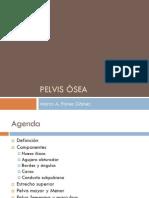 Clase 1. Pelvis ósea.pdf