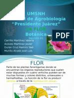 Expo FLOR Botanica