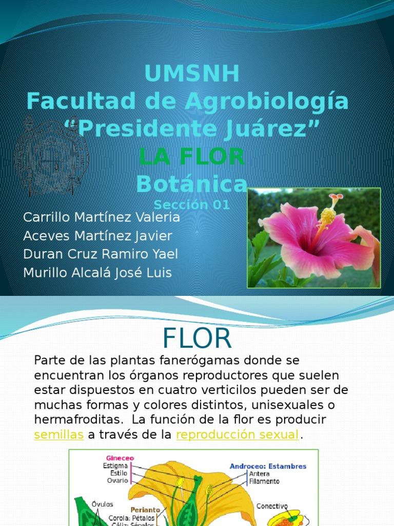 Flor hermafrodita y unisexual humans