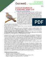 87 MAROCCO Tortore Africane