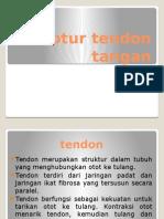 Ruptur Tendon Flexor Extensor