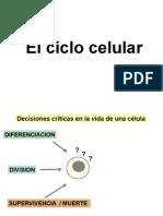 T13 Ciclo Celular