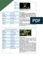 Clasificacion Taxonomica de Las Orquideas