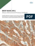 BRAF V600E Mouse Monoclonal Primary Antibody