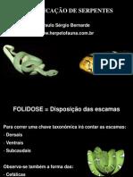 Identif i Cacao Serpent Es