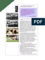 Los Principios Básicos de La Metodología Montessori