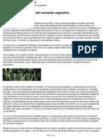LAS PLANTAS SAGRADAS DEL NOROESTE ARGENTINO.pdf