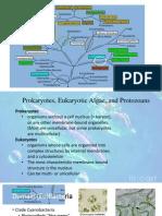 Algae Simple Eukaryotes 1