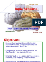 1.Fisiologia-sensoria Presentacion Powerpoint