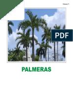 Palmas Herbaceasbueno