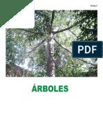 ARBOLES1