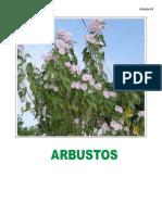 Arbusto s Bueno