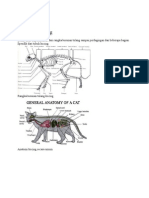 Anatomi kucing