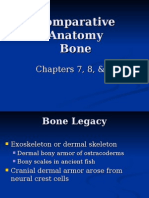 Comparative Anatomy of the Bone (1)