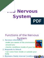 nervous system pp