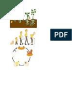 Proceso Desarrollo de Las Personas Animales Plantas Nacen Crecen Se Reproducen Muere