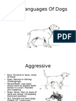 Body Languages of Dogs