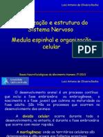 Aula 01 Organização e Estrutura Do Sistema Nervoso