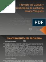 presentacionfinal-121219132122-phpapp02