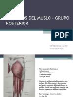 Musculos Del Muslo – Grupo Posterior
