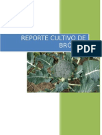 BROCOLI REPORTE.docx