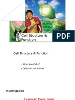 9 IGCSE Cell Stucture & Function Revision