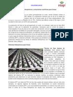 Produccion de fresas en sistemas hidroponicos.pdf