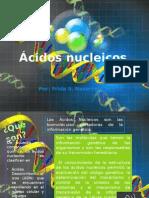 Ac.nucelicos