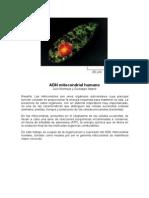 ADN Mitocondrial Humano1
