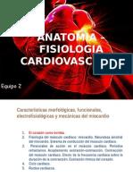 Fisiologia Anatomia cardiaca