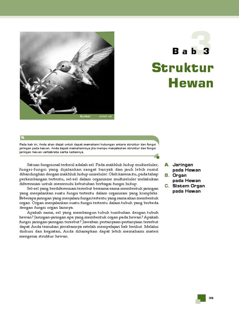 9800 Koleksi Gambar Struktur Hewan Vertebrata Gratis Terbaru