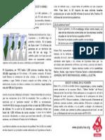Panfleto Palestina 3.0