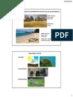 presentacicion algas y protozoos