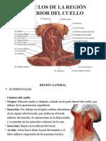 msculosdelcuello-100415093535-phpapp01.pptx