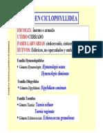 Hymenolepis Sp