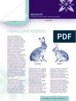 Hares & Rabbits Factsheet