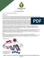 Articulo Los Marcadores Geneticos en El Ganado Bovino(16)