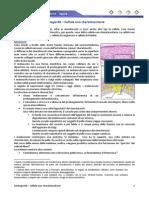 Istologia 06 - Cellule Non Cheratinocitarie