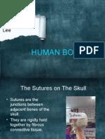 the human bones pptx