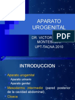 APARATO_UROGENITALupt