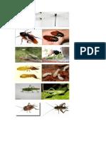 entomologia (Autoguardado)