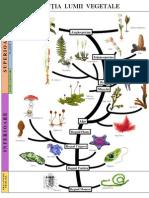 Evoluția lumii Vegetale