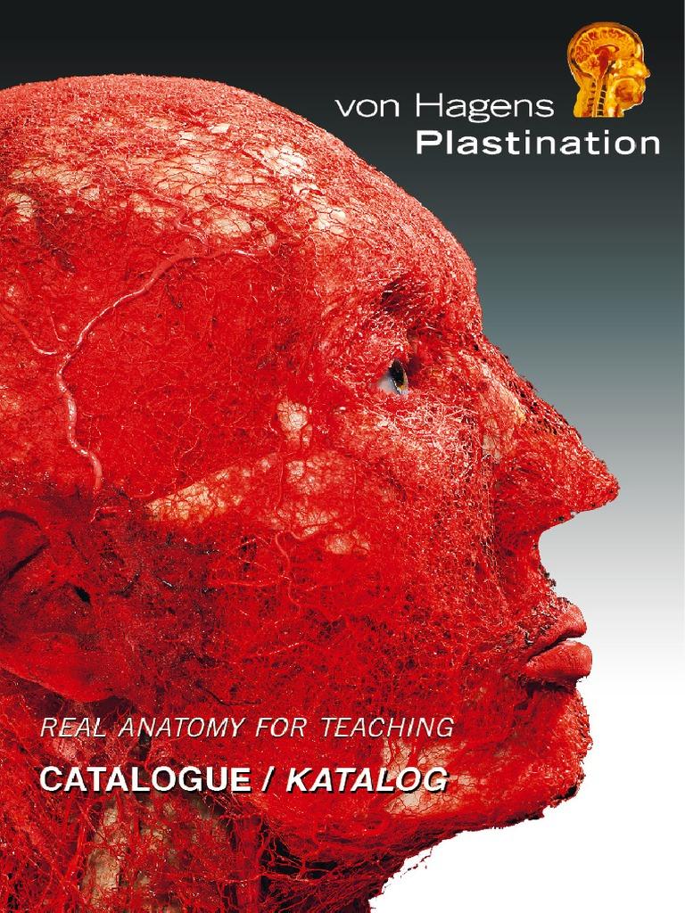 Plastination catalaugue | Anatomy | Zoology