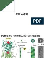 2microtubuli.ppt