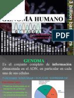 Genoma Humano_Genetica