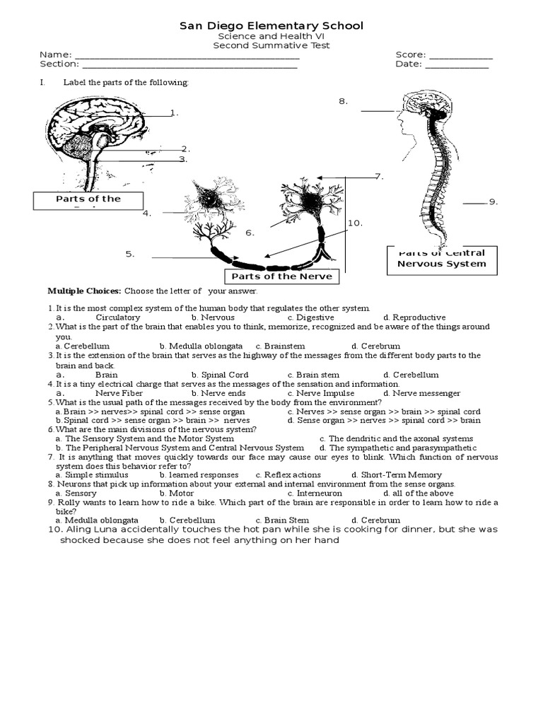 Worksheets Nervous System Worksheets summative test 2 1 nervous system doc