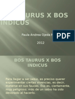 Bos Taurus x Bos Indicus